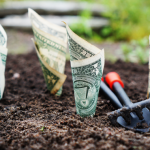 money in soil representing financial growth